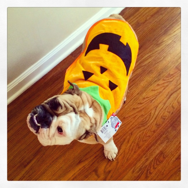 Not a fan of her pumpkin costume.