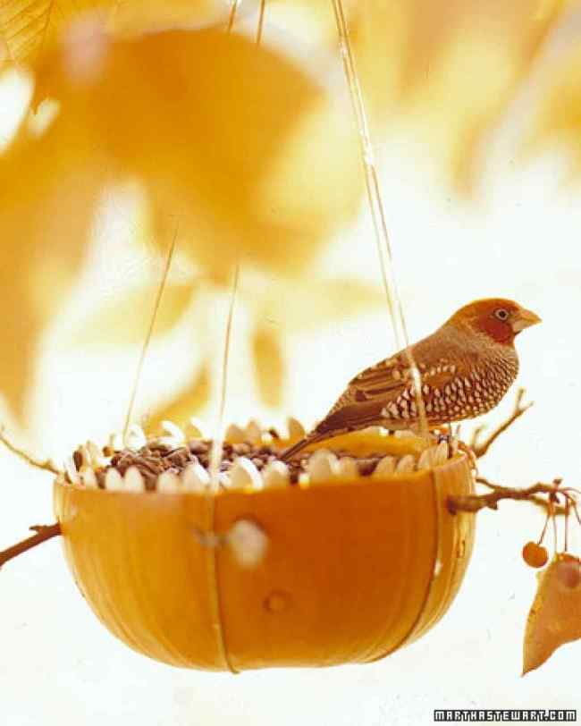 Pumpkin Bird Feeder_xl